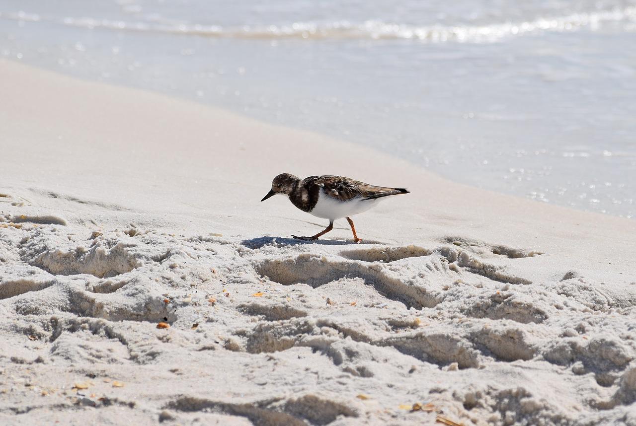 bird on the sand by the ocean