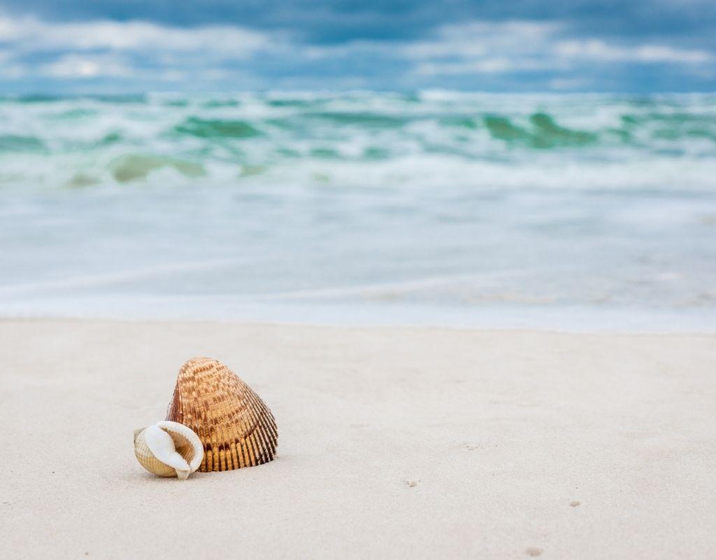shells panama city beach